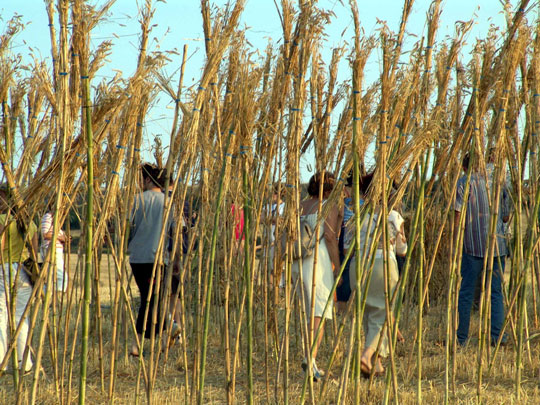 """Las cañas y Haizea """" - 2004 - 1000 cañas, 1000 clavos de 40 cm. de ..."""